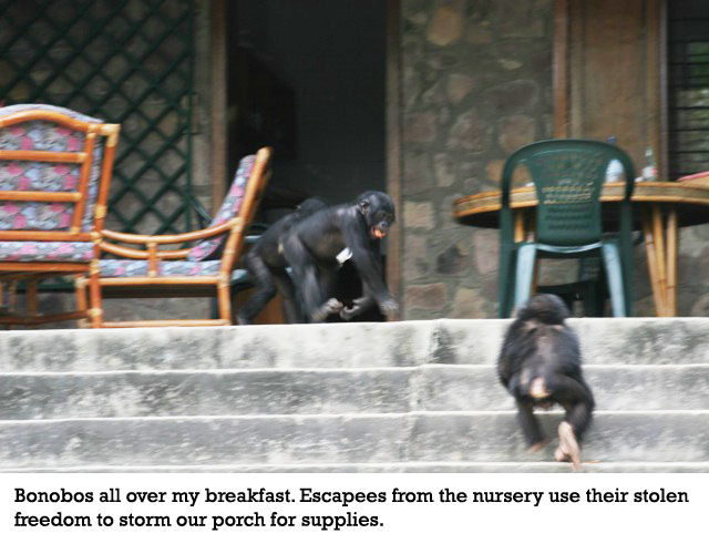 bonobos-on-the-porch