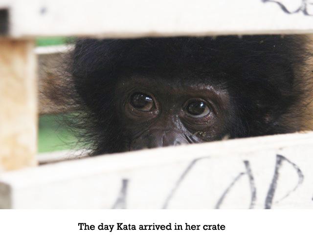 kata-arrives2